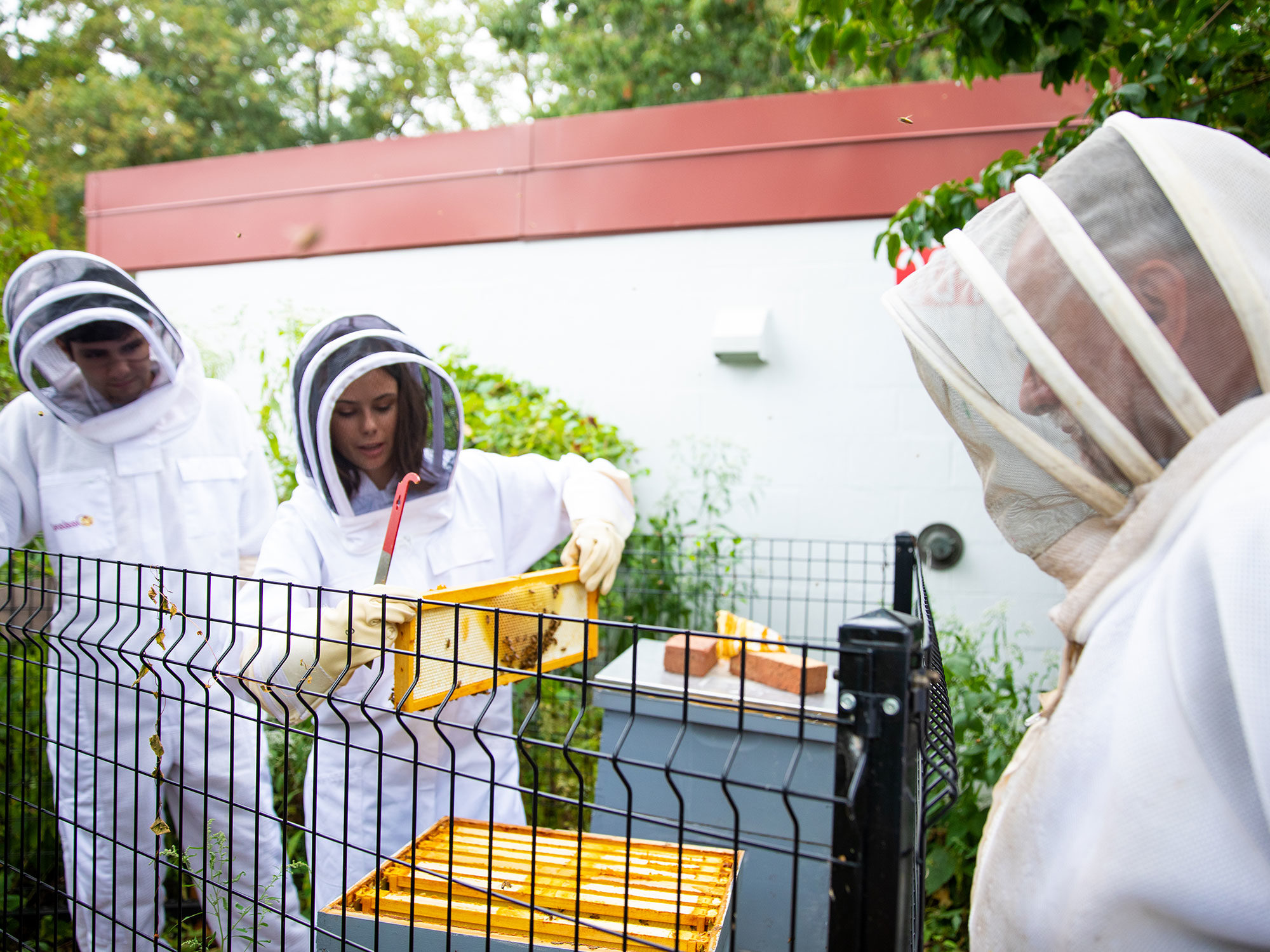 学生们 and pr的essor work together at bee hives